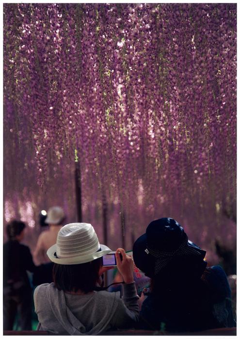 佳 作 「紫一色ね」 銀﨑宜広